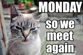 Image result for cat monday