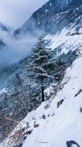Pine Tree Winter Snow Hills 4K Ultra HD ...