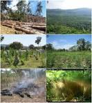 Definition For Biodiversity