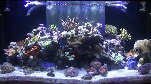 marineland reef capable led lighting review