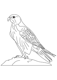 Small Picture Animal Falcon Bird Coloring Pages Animal Coloring pages of