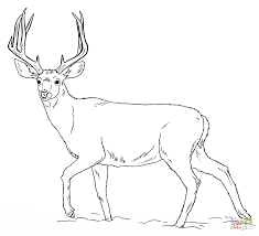 Small Picture Deers coloring pages Free Coloring Pages