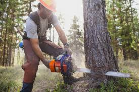 tips for cutting down trees true value rental