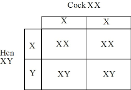 Xx Xy Chart Related Keywords Suggestions Xx Xy Chart