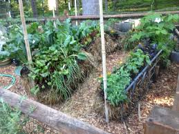 benefits of straw bale gardening s and how to