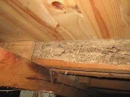 How Termites Effects on Furniture