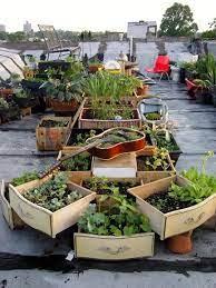 rooftop garden repurposed planter
