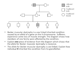 Muscular Dystrophy Pedigree Chart Answers Inheritance Pedigree Charts Ppt Video Online Download