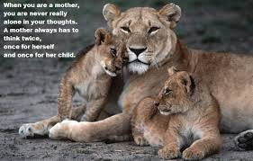 lioness and cubs quotes. Wonderful And Lioness And Cubs Quotes  Photo10 Intended And Cubs Quotes N