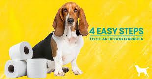 how to stop dog diarrhea 4 simple