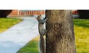 terminix houston tx. Fine Terminix Squirrel On Terminix Houston Tx