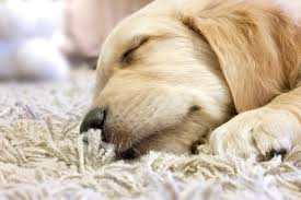 pet stain odor removal raleigh