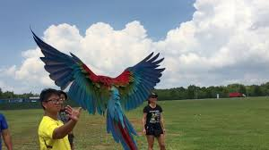 affinity flight free flying parrots in singapore