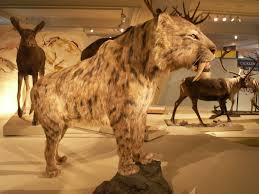 Image result for public domain saber tooth tiger