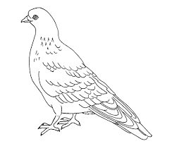Small Picture Free Printable Pigeon Coloring Pages For Kids