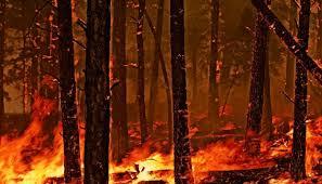 Лесные пожары причины типы интересные факты фото  Типы пожаров