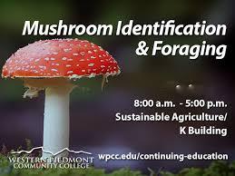 Mushroom Nc Foraging License Workshop Western Piedmont