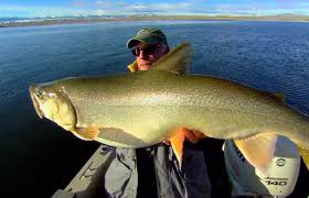 Lake Trout Length To Weight Conversion Chart This Is Fishi