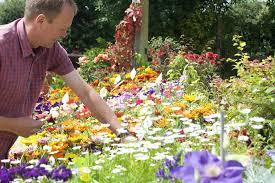 bedding plants new forest setley