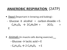 overall balanced equation for aerobic cellular respiration