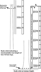 Estimating The Volume Of A Standing Tree Using A Scale