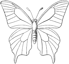 Unconditional Outline Image Of Butterfly Uniqu 12545 Unknown