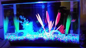 Glofish Light Bar Jesters Glofish Tank Freshwater Aquarium Builds 385969