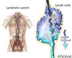 swollen lymph nodes information mount