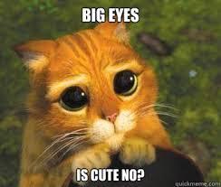 Cat Big Eyes Meme | Tombree via Relatably.com