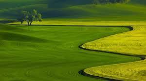 Hd Wallpaper Nature Green Free Hd ...