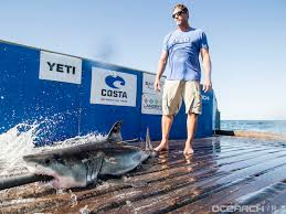 first shark pup tagged off montauk is back for season noaa first shark pup tagged off montauk is back for season noaa