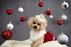 cute merry christmas wallpaper dogs.  Dogs Cute Christmas Dog Wallpaper For Backgrounds Wallpapers For  Desktop Funny Wallpapers Intended Merry Dogs C