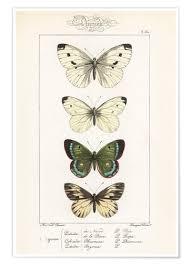 Premium Poster Chart Of Butterflies