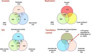 Venn Diagram Of Transcription And Translation Venn Diagrams To Illustrate The Distribution Of Proteins