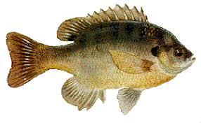 Aquatic Species Found In Fresh Water