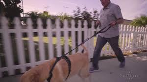 Rabbitgoo Dog Harness Size Chart Rabbitgoo No Pull Dog Harness Instruction