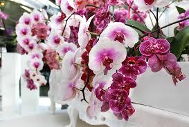 Картинки по запросу orhidejas
