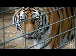 Should animals be kept in captivity persuasive essay