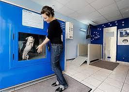 Dog Vending Machine Magnificent DogOMat
