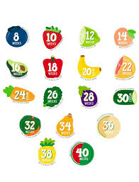 Pregnancy Stomach Size Chart Pearhead Pregnancy Fruit Belly Stickers Motherhood Maternity
