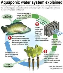 hydroponic system with fish diy hydroponic system with fish how to make tank cs