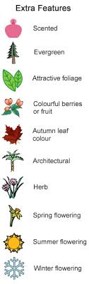 plants for diffe soil types extra features evergreen scented attractive foliage