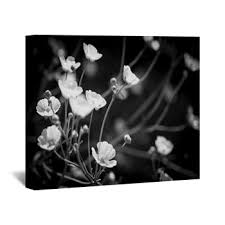 black and white fl wall decor