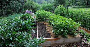 how to grow more vegetables this season
