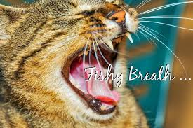 cats breath stinks.  Cats Why Does My Cat Breath Smell Like Fish Header On Cats Breath Stinks 2