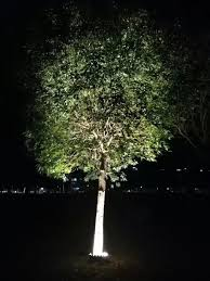 Decorating Outside Tree With Lights Hot Item Ip65 Outdoor Lighting 6w 8w 12w Decoration Tree Light