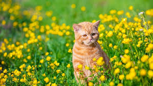 can cats eat dandelions are dandelions
