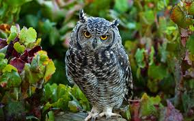 Image result for sad owl picture