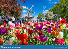 keukenhof the netherlands may 2018 blooming colorful tulips flowerbed in public flower