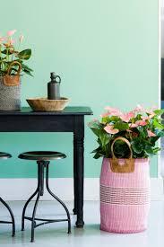 Anthurium: kopen en verzorging dier en Natuur: Bloemen